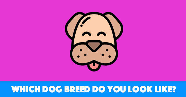 Which Dog Breed Do You Look Like?